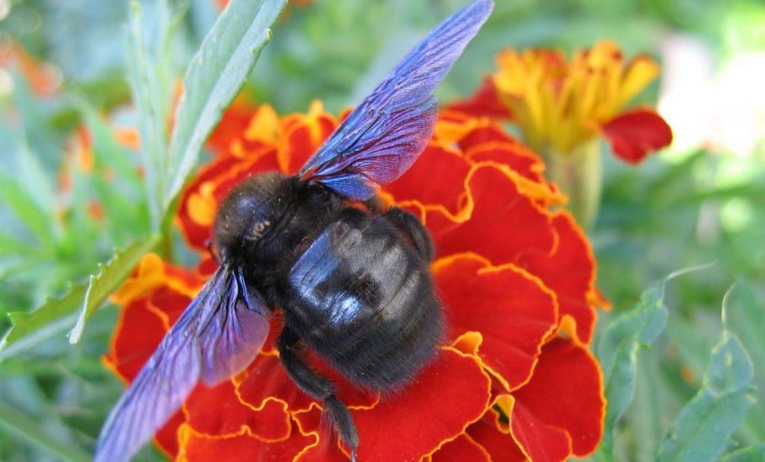 Ob 3. svetovnem dnevu čebel – vsak od nas lahko pomaga čebelam